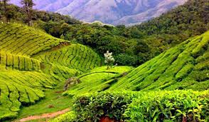 Tourist Places to visit in Araku valley - Coffee Plantation