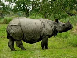 Bhalukpong Sightseeing, Tourist Places to visit in Bhalukpong - Kaziranga National Park