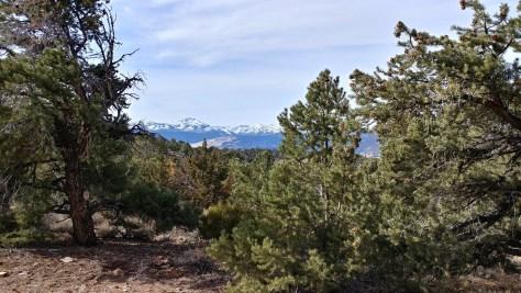 Pinyon-juniper woodland overlooking the Sierras