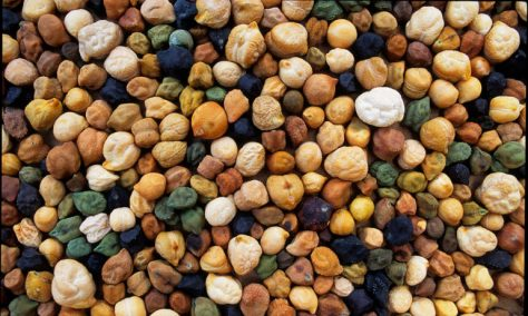 Chickpea diversity. Each and every variation in shape, color, and size is selected for. (image: Open Source Seed Initiative, OSSI)