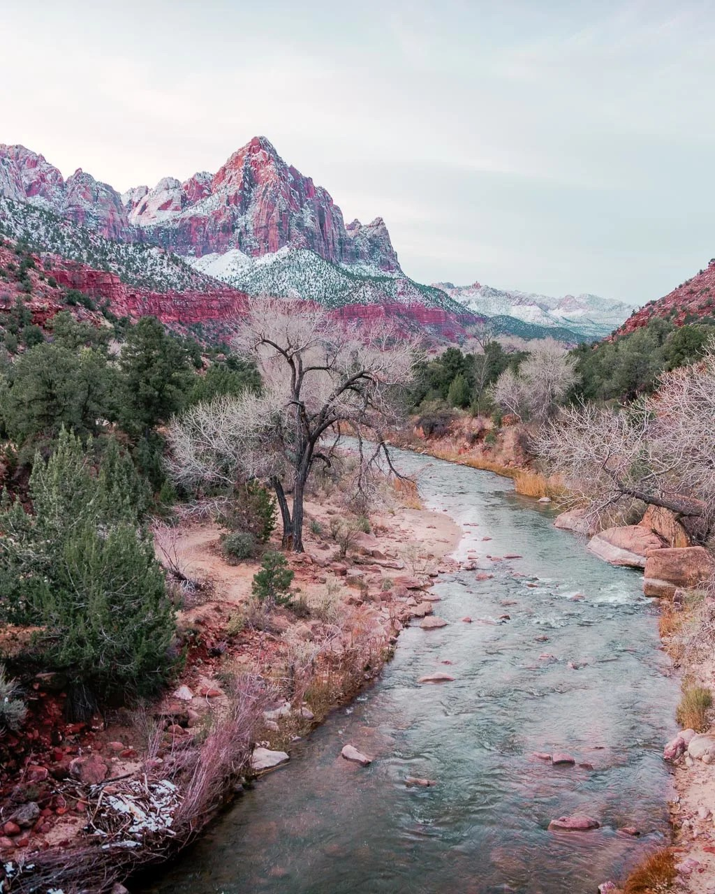 Watchman at Zion in Winter