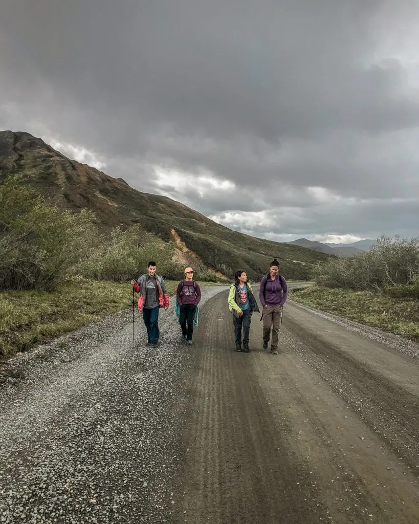Walking the road to hop on a bus, Denali National Park, Hiking and Camping, Alaska