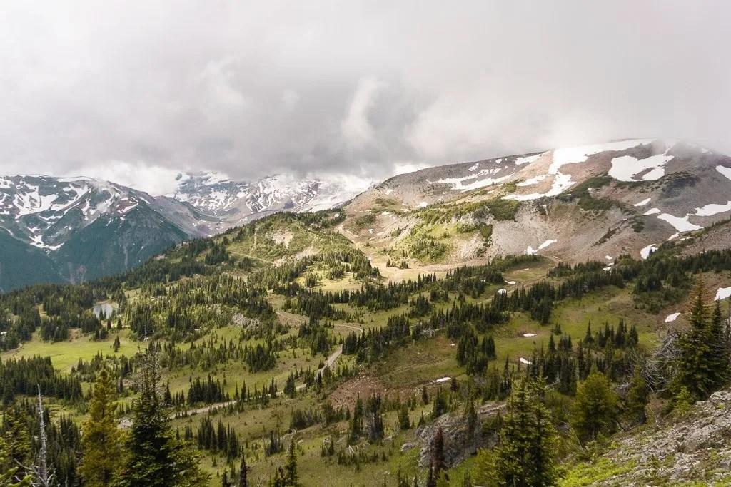 Sunrise meadows, Mount Rainier National Park