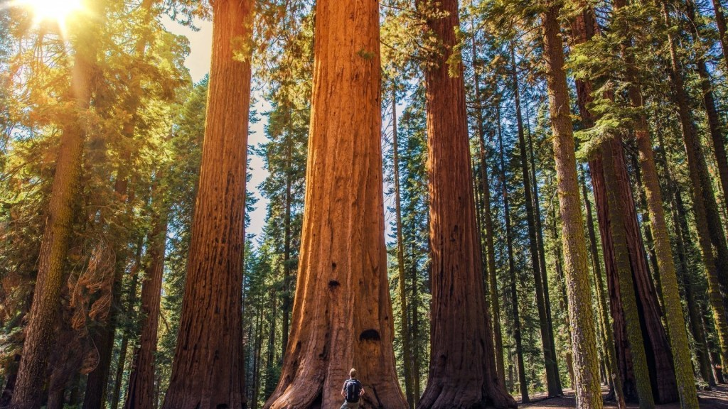 Sequoias, best campgrounds California
