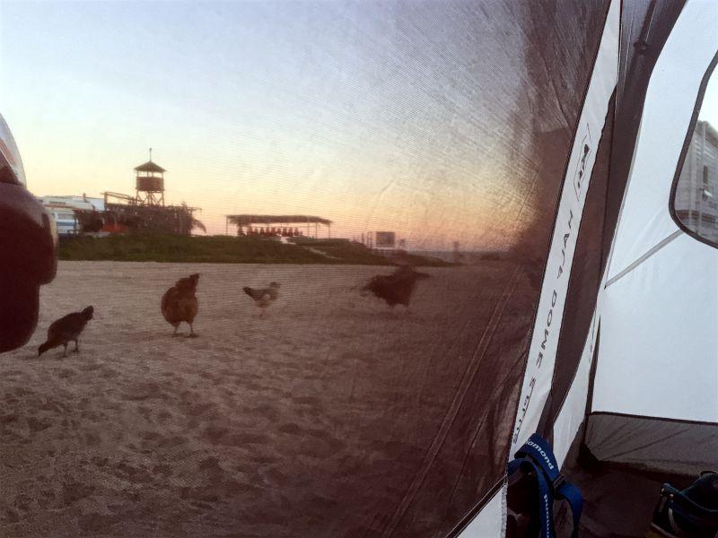 Playa El Arbolito Campground
