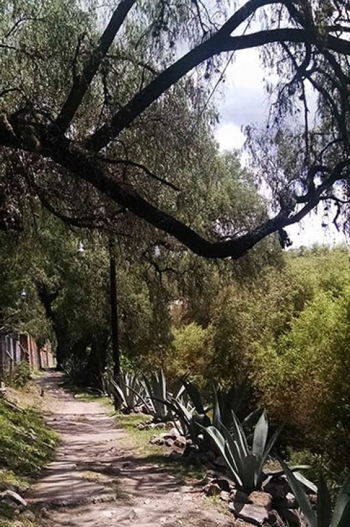 A foot path runs beside the arroyo in San Miguel de Allende