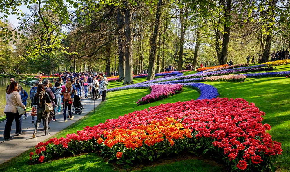 Keukenhof Gardens in the Netherlands is only open for a few weeks every spring and showcases all sorts of bulb flowers.