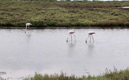 Flamingo's in de Delta