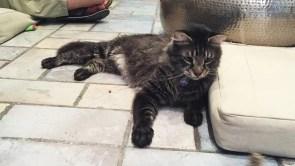 Cuttie Kittie Crumbs & Whiskers Cat Cafe