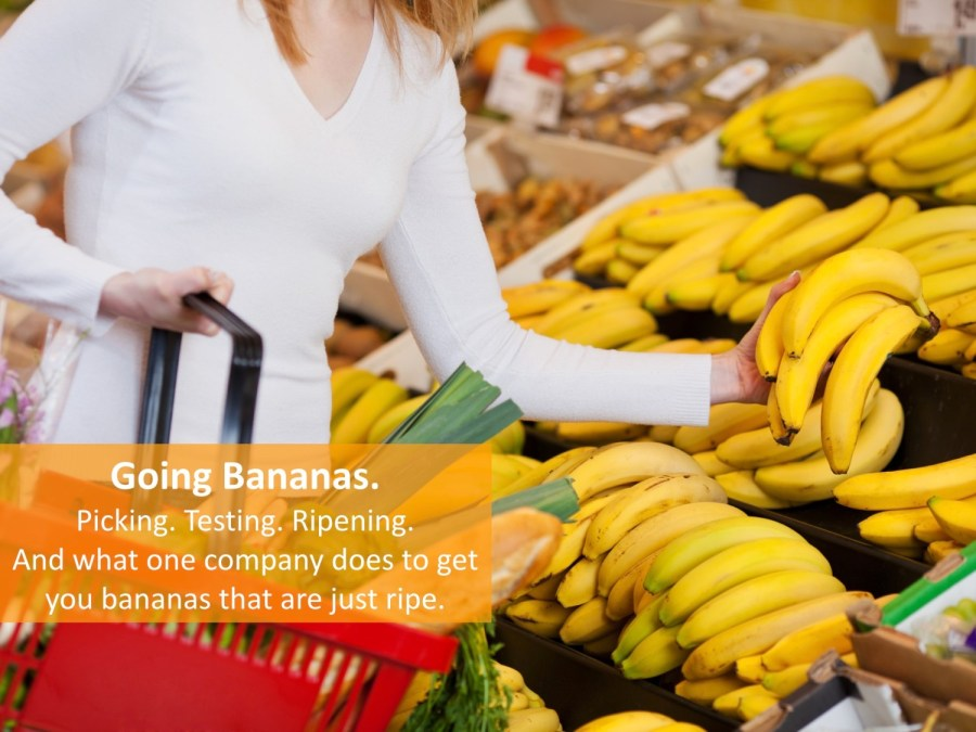 How Companies Get Bananas That Are Just Ripe to the Supermarket