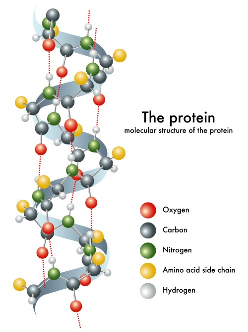 NaCl and protein