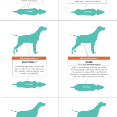 Dog Diagram Outline Large Kc Hilites Wiring A Weight Loss Guide For Your Obese Nomnomnow Overweight Chart