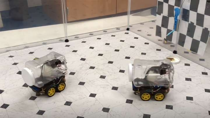 Teaching Rats To Drive Tiny Cars