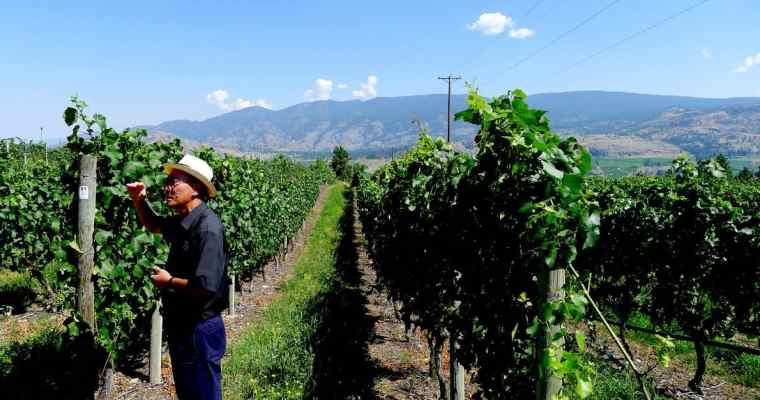 See Ya Later Ranch Winery Tour   Okanagan Falls Osoyoos