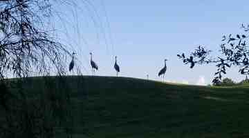 Sunny Side Up: The Birds