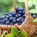 Kyle's Culinary Column: Find Your Thrill on Blueberry Hill