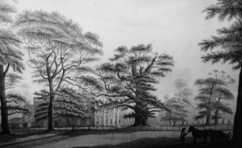 Fredville House and the Majestie Oak in the early 1800's, artist unknown.