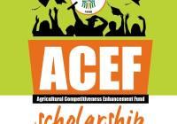 acef scholarship
