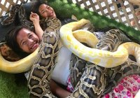 Guests enjoy the snake massage in Kalibo Ostrich Farm
