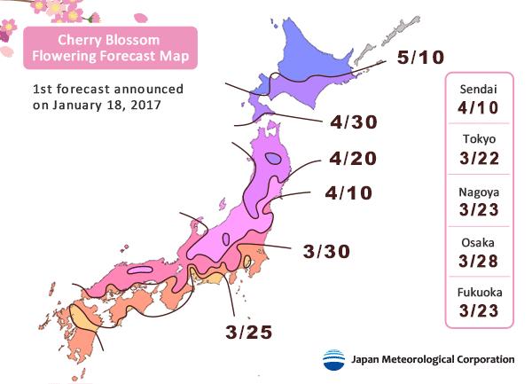 Cherry Blossom Schedule