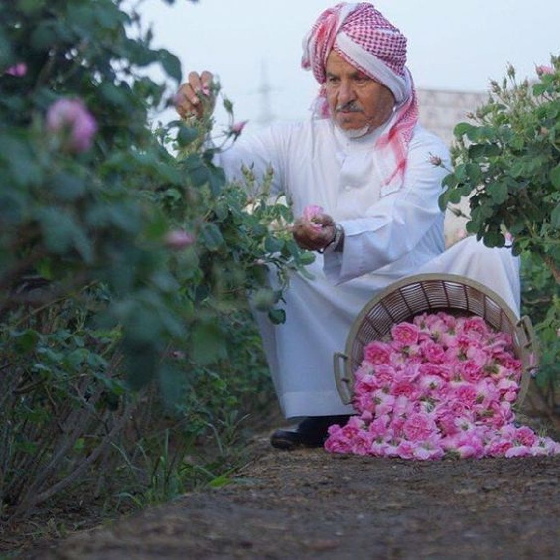 Rose Festival in Oman