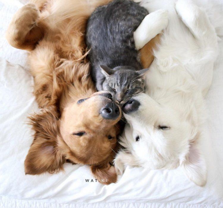 Labbraccio pi dolce del mondo tra due cani e un gatto
