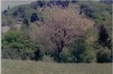 carnia5