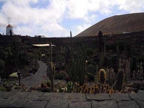 jardin-du-cactus
