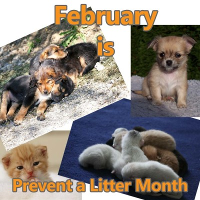 """Image result for national prevent a litter month"""""""