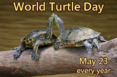 World Turtle Day - 23 May  IMAGES, GIF, ANIMATED GIF, WALLPAPER, STICKER FOR WHATSAPP & FACEBOOK