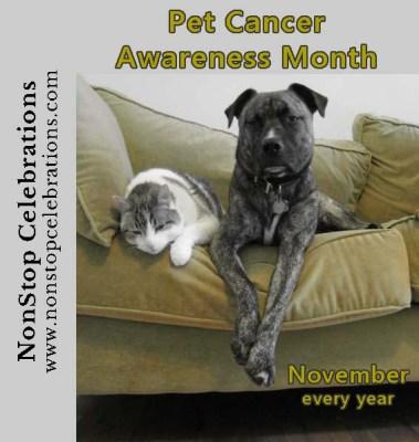 Pet Cancer Awareness Month reminds us pets get cancer too
