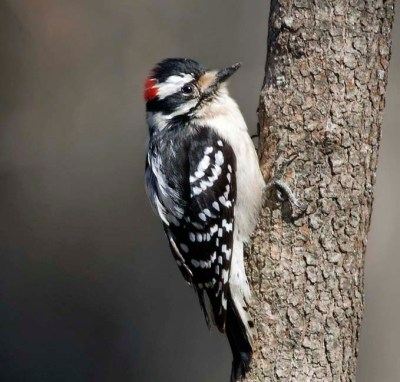 The Great Backyard Bird Count happens every February