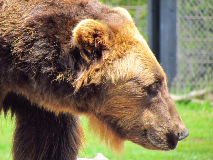 Bear & Wolf Discovery Center