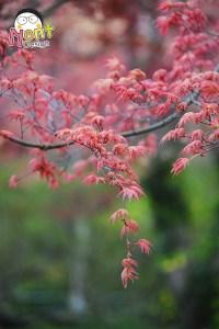 4 Seasons in Japan