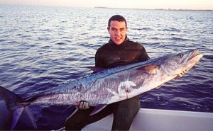 springall_Spanish Mackerel spearfishing record