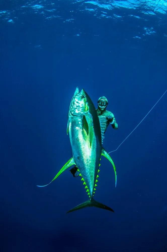 Ascension Island Spearfishing Coatesmans Spearfishing Safaris
