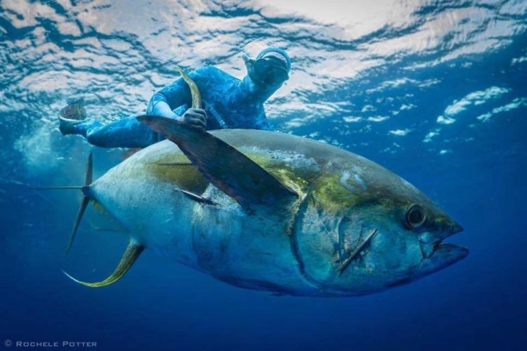 Nat Davey Spearfishing 104kg Yellowfin Tuna from Ascension Island