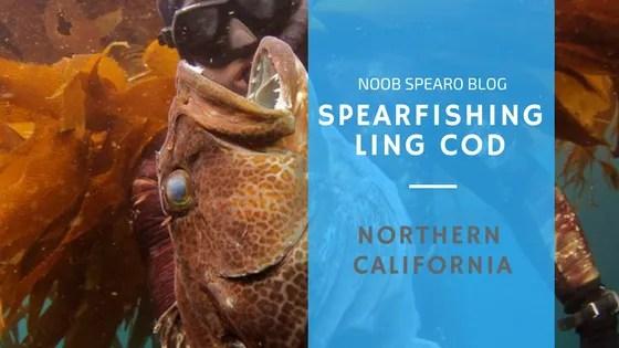 Spearfishing California – Ling Cod