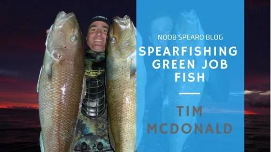 Spearfishing Green Jobfish