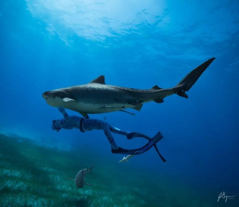 Hecs spearfishing technology. Interview with Warren Bird