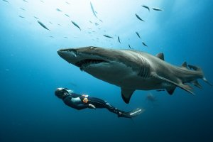 Spearfishing First Aid. Sam Blount Photography. Frontline Freediving