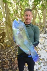 Alistair Cooke The Art of Taking Noobs Spearfishing. Blackspot Tuskfish