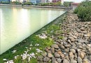 台南》安平運河驚見魚屍群 清出1.2噸