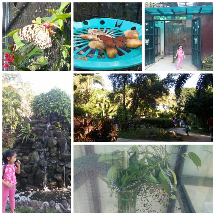 Rainforest-butterfly-house