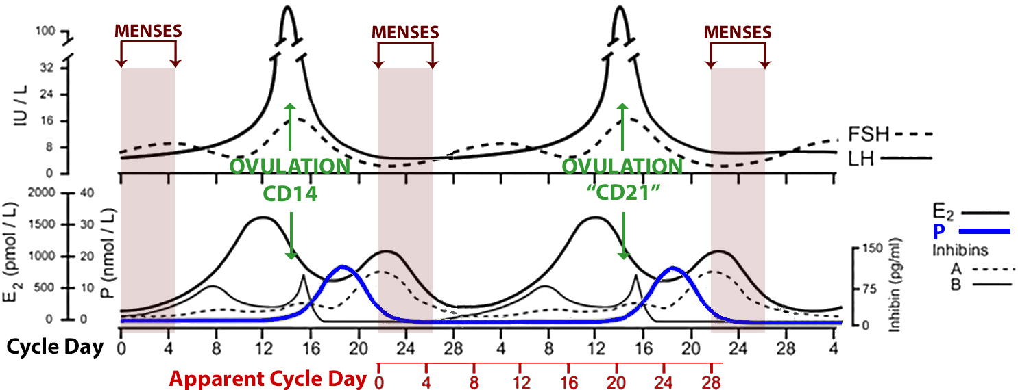 Late menstrual cycle on clomid