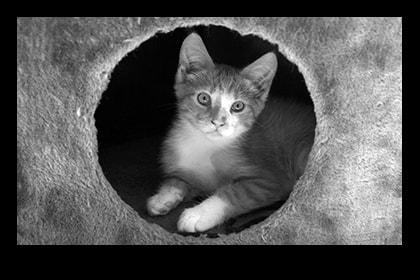 Poster Kitten #26003-min
