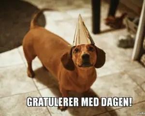 Gratulerer med dagen - hund med hatt