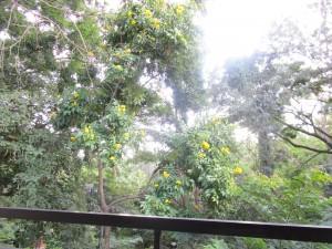 Blick vom Balkon in den Park