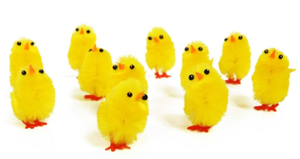 lots-of-easter-chickens