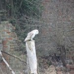 One of the owls at The Brickyard Camping site on the North Norfolk Coast